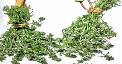 susenje ljekovitog bilja plod kestena BiljnaLjekarna