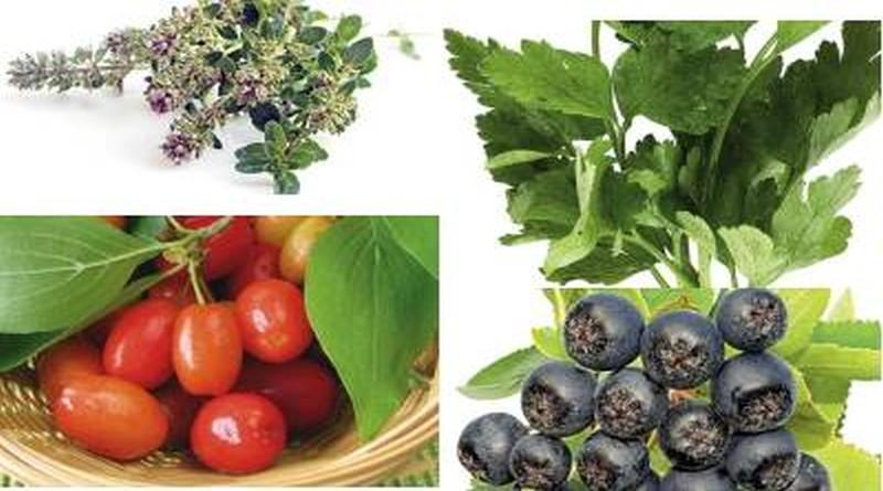 ljekovito bilje