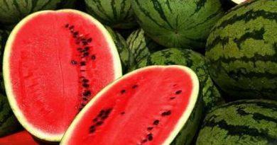 Lubenica je odlična namirnica za vruće ljetne dane