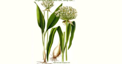 srijemuš izgled biljke