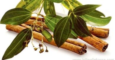ceylon cinnamon cimet Biljna Ljekarna