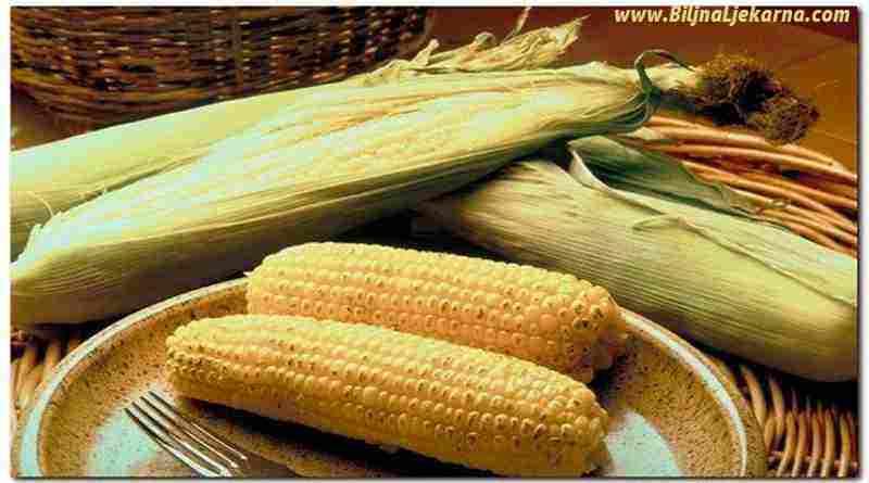 kukuruz Biljna Ljekarna