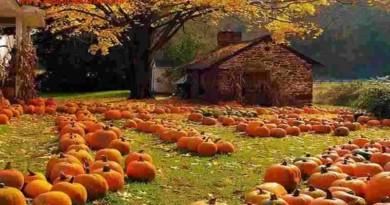 pumpkins Biljna Ljekarna