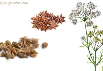 BiljnaLjekarna Ljekovita biljka Anis