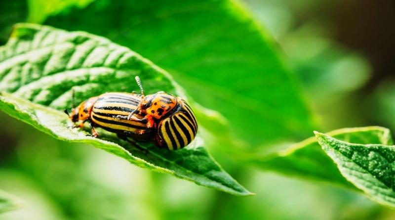 Ekoloska sredstvima za zastitu bilja