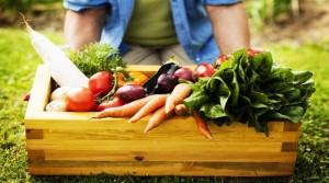 ekoloska proizvodnja povrca