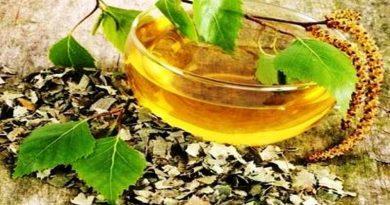 Prirodni recepti od breze