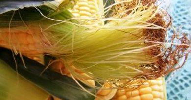 kukuruzna svila