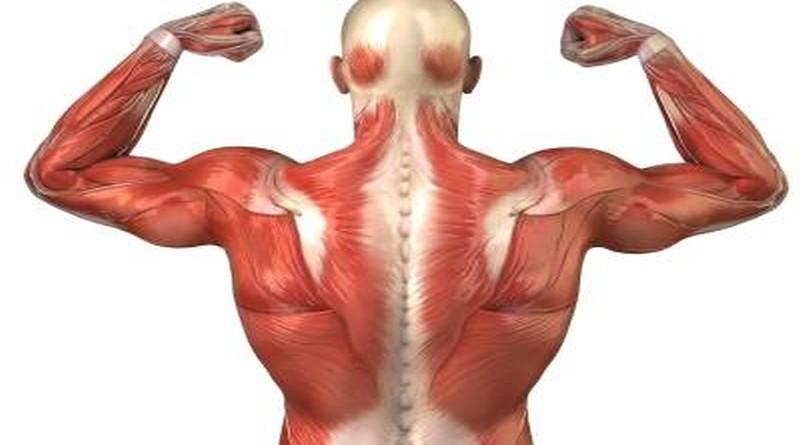 mišici tjelesna aktivnost