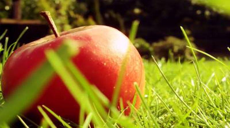 svjeza jabuka