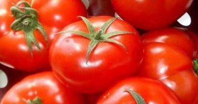 paradajz rajčica pomidoro