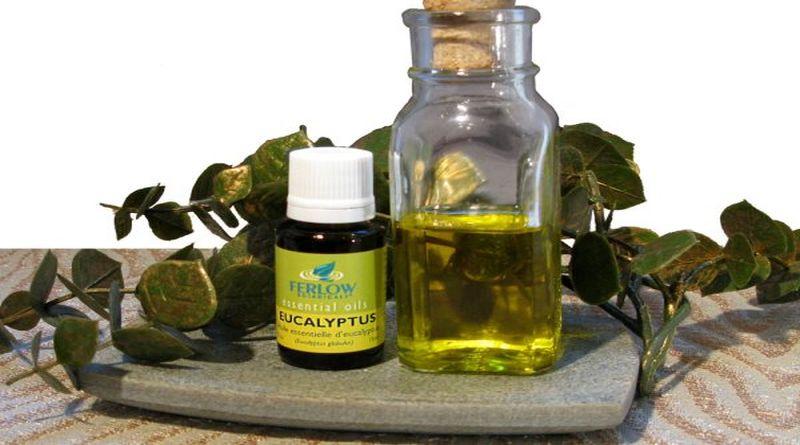 ulje aukaliptusa