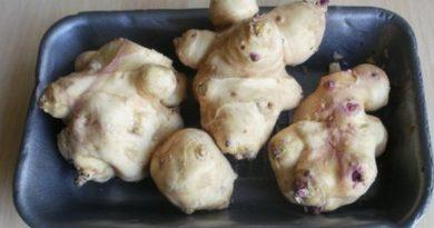 cicoka divlji krumpir