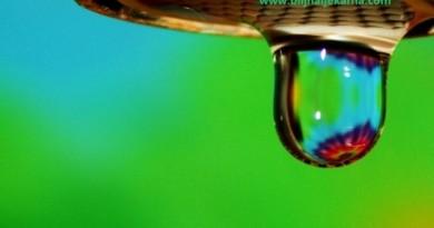 slika prirode-BiljnaLjekarna