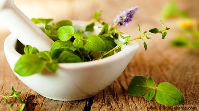 ljekovite biljke Biljna Ljekarna