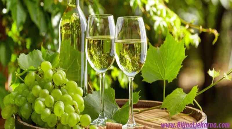 BiljnaLjekarna Istria Grape Harvesting Zdravlje u grozdju